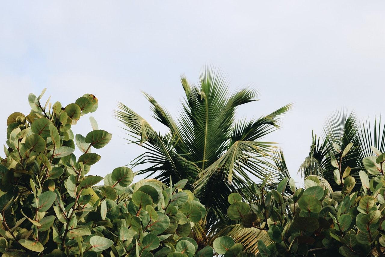 Bomen Enzo voor borderpakket vaste planten